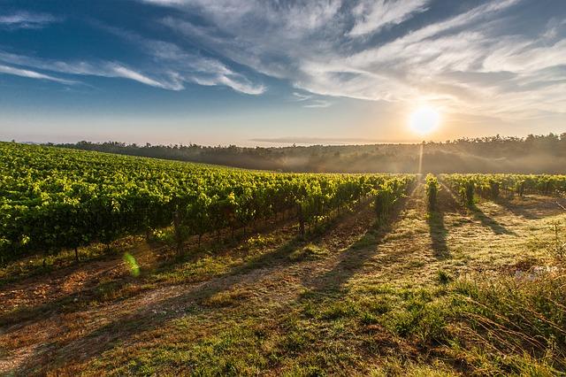 vinice toskánsko