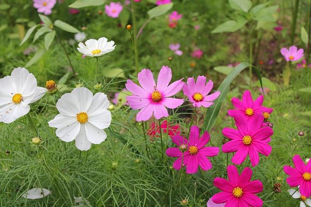 zahradní kytičky